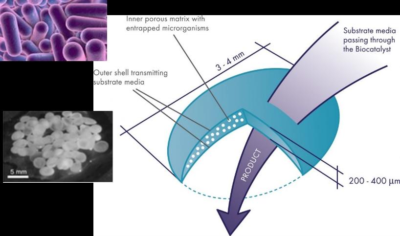 bioclens